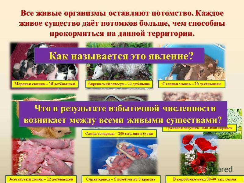 Все живые организмы оставляют потомство. Каждое живое существо даёт потомков больше, чем способны прокормиться на данной территории. Морская свинка – 18 детёнышей Степная мышь – 10 детёнышей Виргинский опоссум – 22 детёныша Золотистый хомяк – 12 детё