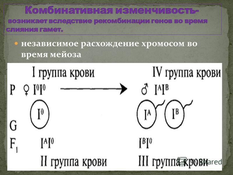 независимое расхождение хромосом во время мейоза случайное сочетание хромосом во время оплодотворения рекомбинация генов вследствие кроссинговера