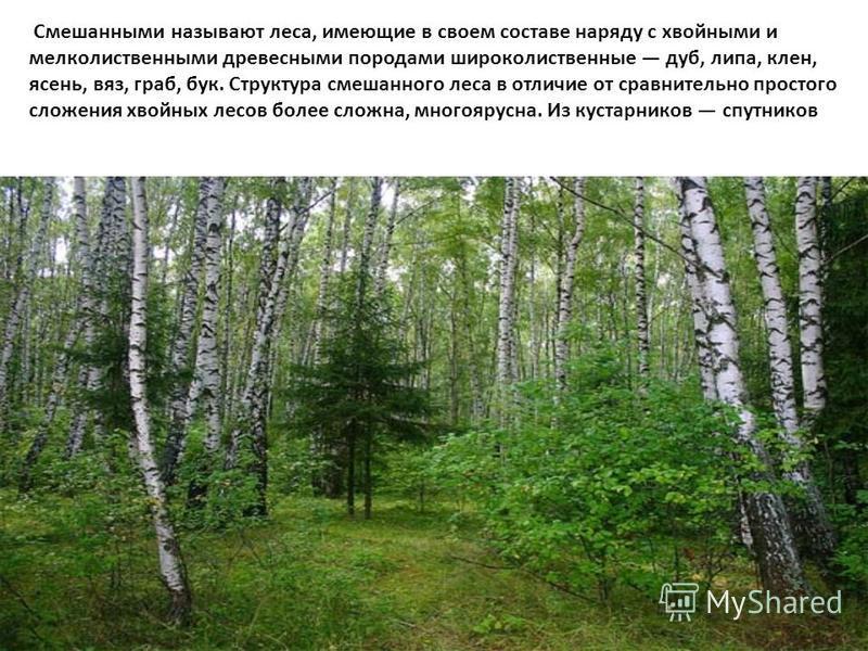 Смешанными называют леса, имеющие в своем составе наряду с хвойными и мелколиственными древесными породами широколиственные дуб, липа, клен, ясень, вяз, граб, бук. Структура смешанного леса в отличие от сравнительно простого сложения хвойных лесов бо