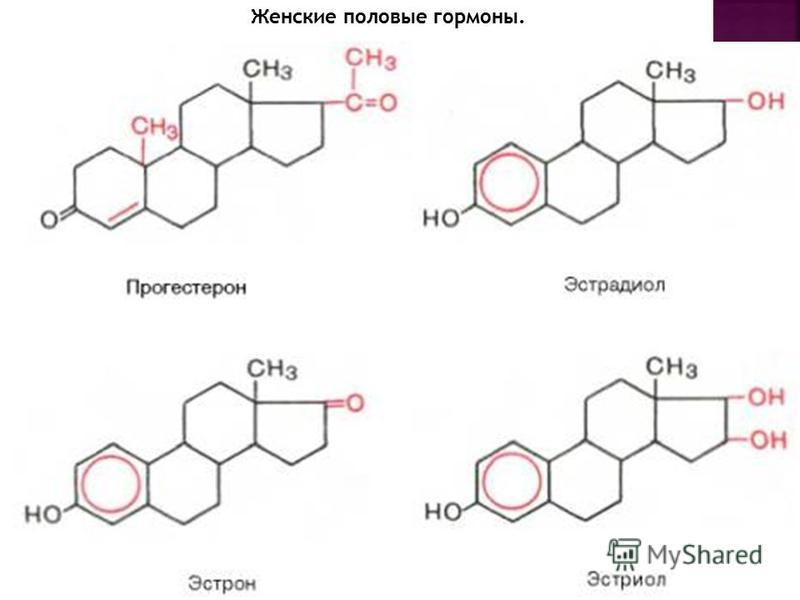 Женские половые гормоны.