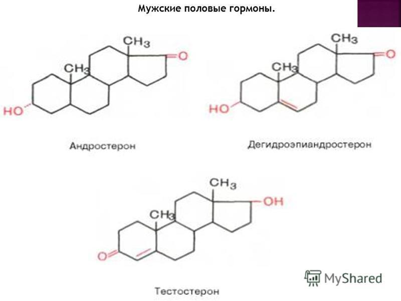 Мужские половые гормоны.