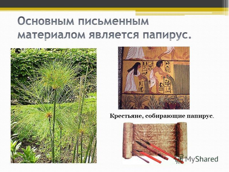 Крестьяне, собирающие папирус.