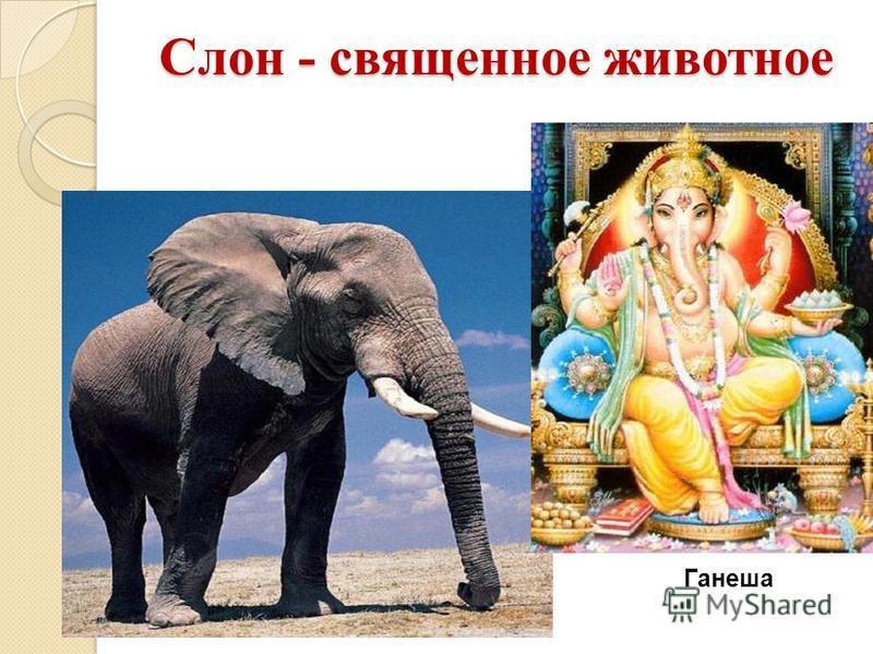 Слон - священное животное Ганеша