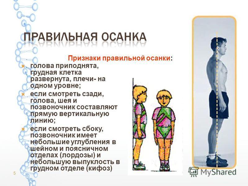голова приподнята, грудная клетка развернута, плечи- на одном уровне; если смотреть сзади, голова, шея и позвоночник составляют прямую вертикальную линию; если смотреть сбоку, позвоночник имеет небольшие углубления в шейном и поясничном отделах (лорд