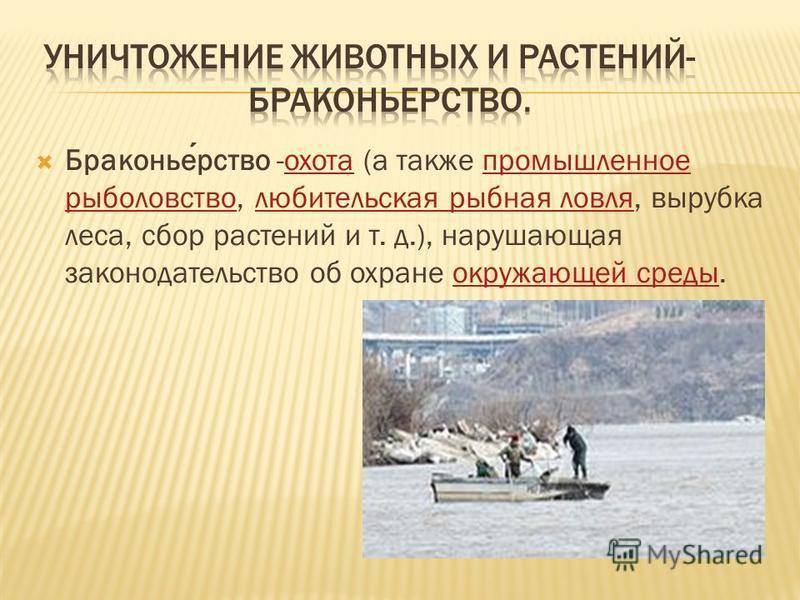 Браконьерство -охота (а также промышленное рыболовство, любительская рыбная ловля, вырубка леса, сбор растений и т. д.), нарушающая законодательство об охране окружающей среды.охота промышленное рыболовство любительская рыбная ловля окружающей среды