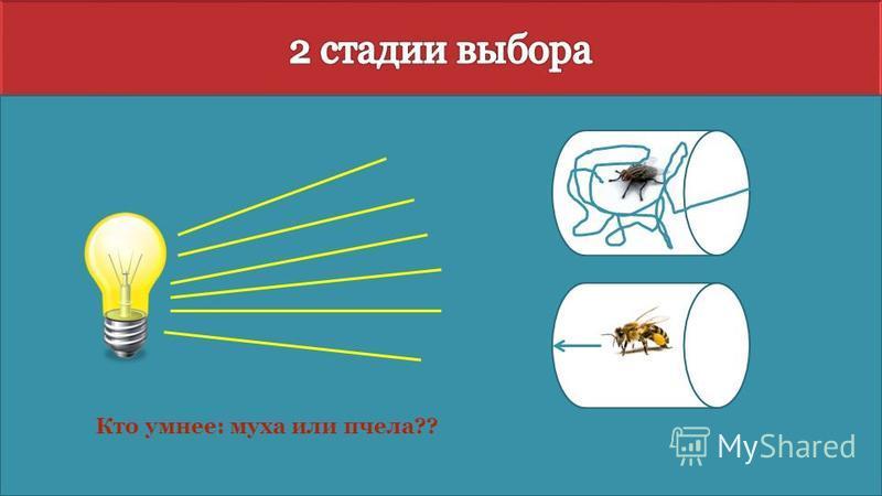 Кто умнее: муха или пчела??