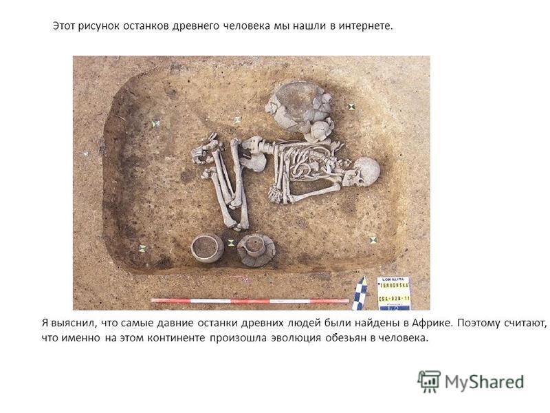 Этот рисунок останков древнего человека мы нашли в интернете. Я выяснил, что самые давние останки древних людей были найдены в Африке. Поэтому считают, что именно на этом континенте произошла эволюция обезьян в человека.