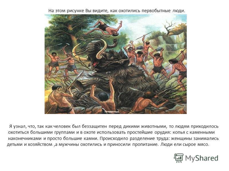 На этом рисунке Вы видите, как охотились первобытные люди. Я узнал, что, так как человек был беззащитен перед дикими животными, то людям приходилось охотиться большими группами и в охоте использовать простейшие орудия: копья с каменными наконечниками