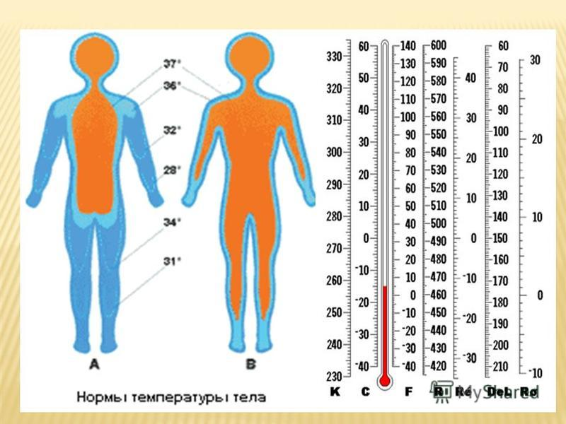 Нормальная температура тела для беременных 44