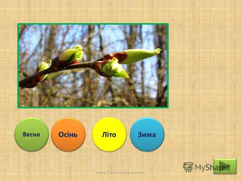 Весна Осінь Літо Зима Автор П'ятих Олена Іванівна