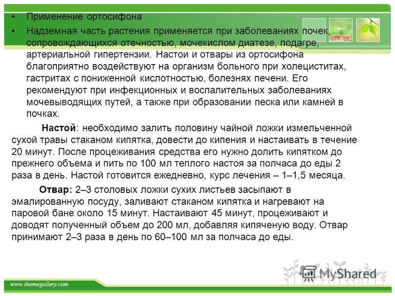 www.themegallery.com Применение ортосифона Надземная часть растения применяется при заболеваниях почек, сопровождающихся отечностью, мочекислом диатезе, подагре, артериальной гипартензии. Настои и отвары из ортосифона благоприятно воздействуют на орг