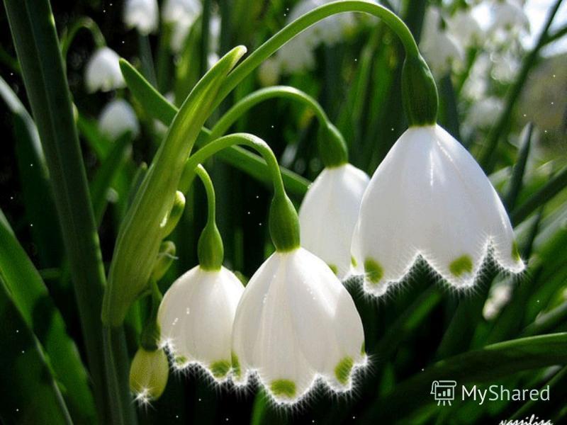 Це перші первоцвіти, красиві, ніжні дуже приємні квіти. Це перші первоцвіти, красиві, ніжні дуже приємні квіти.
