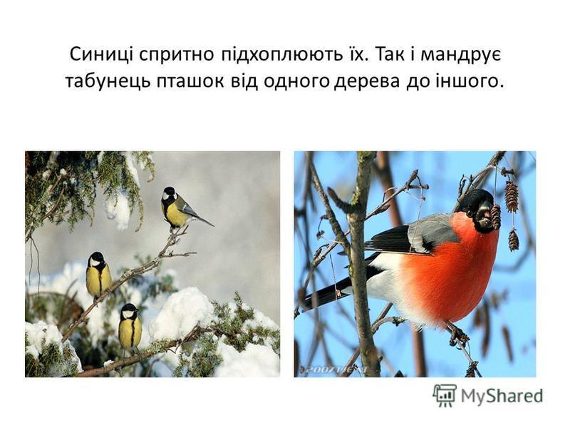 Синиці спритно підхоплюють їх. Так і мандрує табунець пташок від одного дерева до іншого.