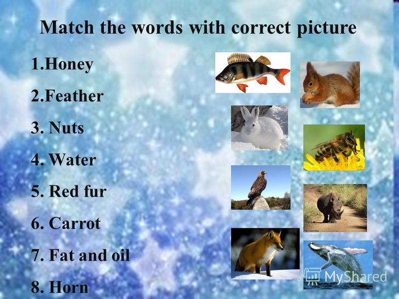 1.Honey 2.Feather 3. Nuts 4. Water 5. Red fur 6. Carrot 7. Fat and oil 8. Horn Match the words with correct picture