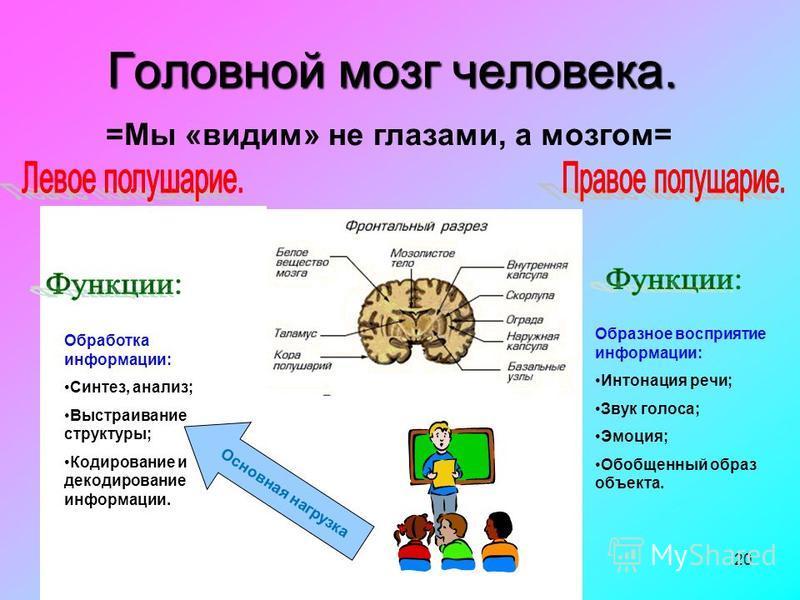 20 Головной мозг человека. =Мы «видим» не глазами, а мозгом= Обработка информации: Синтез, анализ; Выстраивание структуры; Кодирование и декодирование информации. Образное восприятие информации: Интонация речи; Звук голоса; Эмоция; Обобщенный образ о