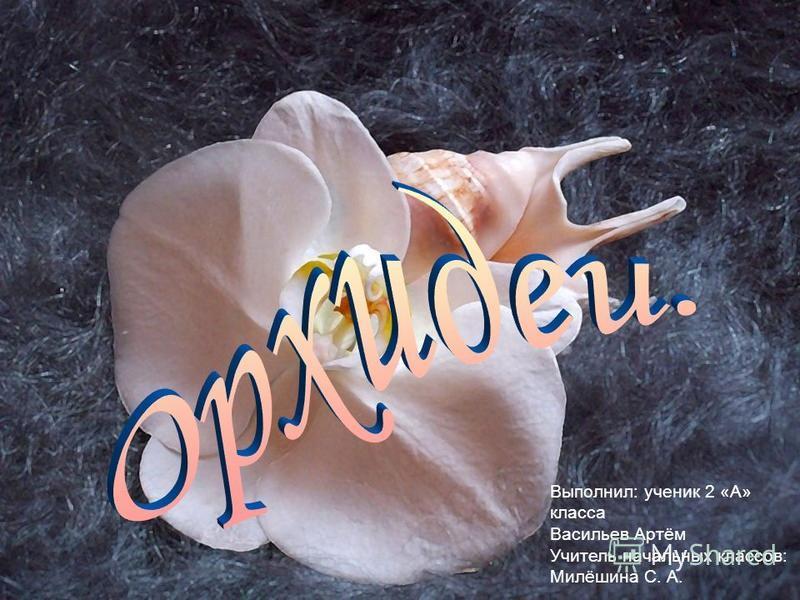 Выполнил: ученик 2 «А» класса Васильев Артём Учитель начальных классов: Милёшина С. А.