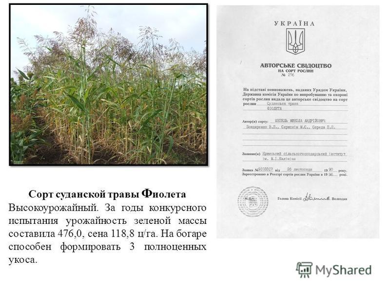 Сорт суданской травы Ф иолета Высокоурожайный. За годы конкурсного испытания урожайность зеленой массы составила 476,0, сена 118,8 ц/га. На богаре способен формировать 3 полноценных укоса.