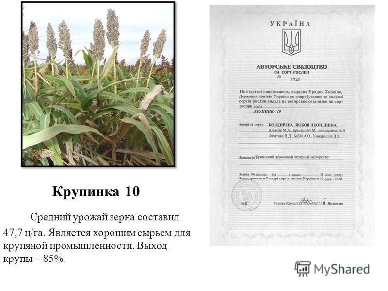 Крупинка 10 Средний урожай зерна составил 47,7 ц/га. Является хорошим сырьем для крупяной промышленности. Выход крупы – 85%.