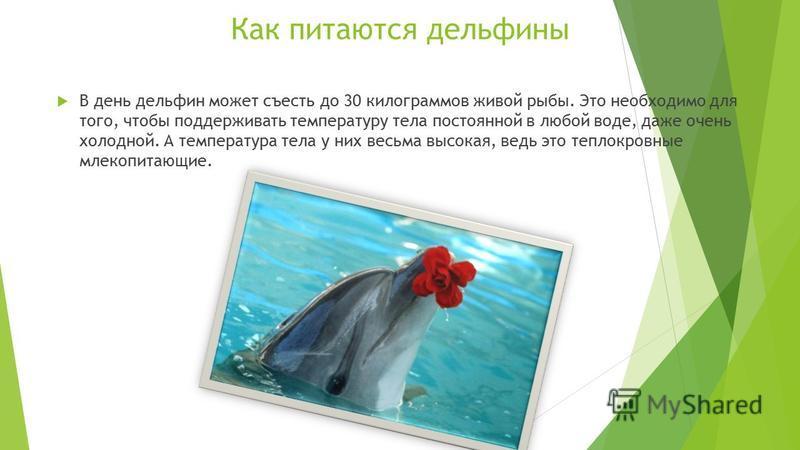 ВСЁ О ДЕЛЬФИНАХ Дельфины - одни из самых загадочных животных на нашей планете. Интеллект этих морских жителей считают настолько высоким, что их называют «людьми моря». Ученые утверждают, что дельфины умнее и сообразительнее всех остальных животных