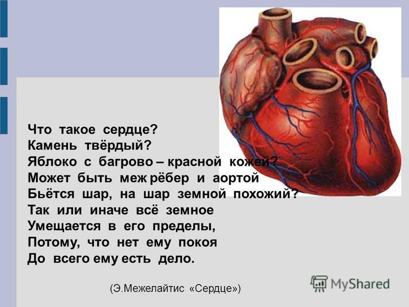 Что такое сердце? Камень твёрдый? Яблоко с багрово – красной кожей? Может быть меж рёбер и аортой Бьётся шар, на шар земной похожий? Так или иначе всё земное Умещается в его пределы, Потому, что нет ему покоя До всего ему есть дело. (Э.Межелайтис «Се