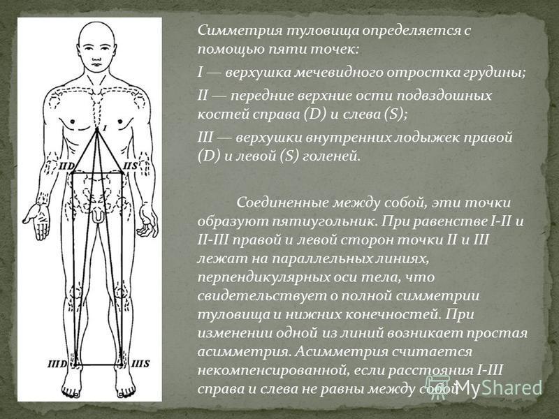 Симметрия туловища определяется с помощью пяти точек: I верхушка мечевидного отростка грудины; II передние верхние ости подвздошных костей справа (D) и слева (S); III верхушки внутренних лодыжек правой (D) и левой (S) голеней. Соединенные между собой