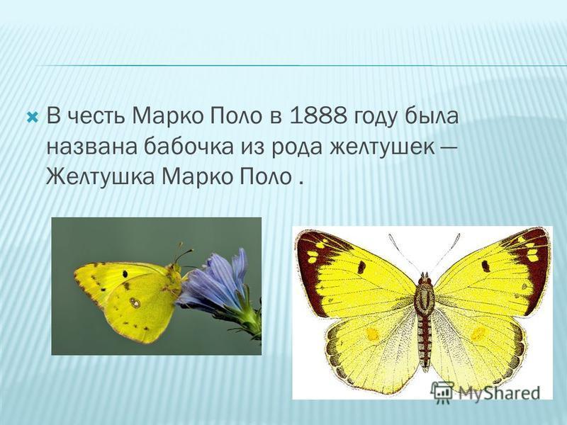 В честь Марко Поло в 1888 году была названа бабочка из рода желтушек Желтушка Марко Поло.