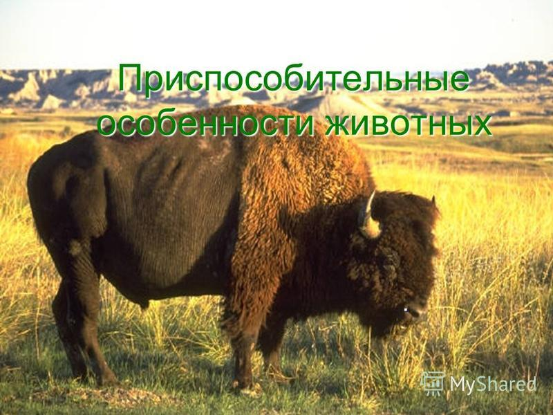 Приспособительные особенности животных.