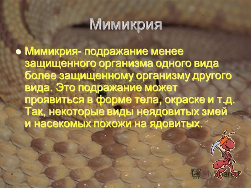Мимикрия Мимикрия- подражание менее защищенного организма одного вида более защищенному организму другого вида. Это подражание может проявиться в форме тела, окраске и т.д. Так, некоторые виды неядовитых змей и насекомых похожи на ядовитых. Мимикрия-