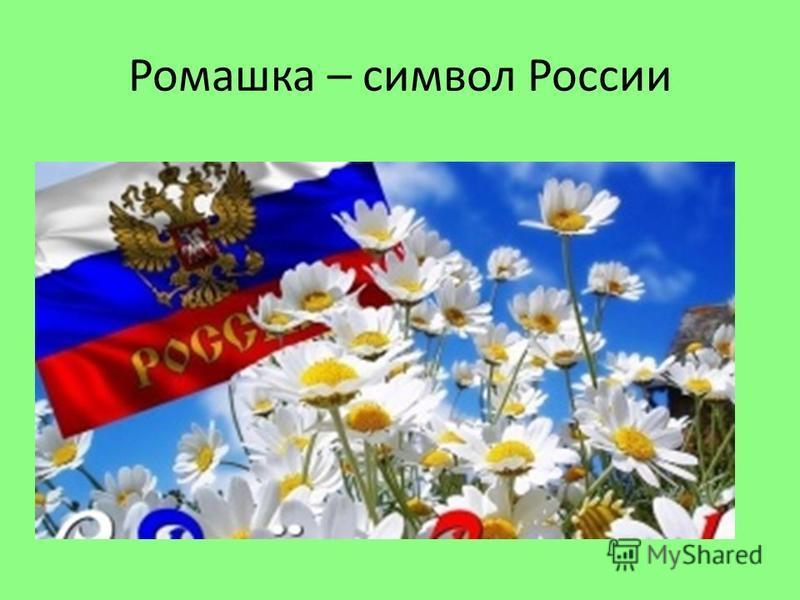 Ромашка – символ России