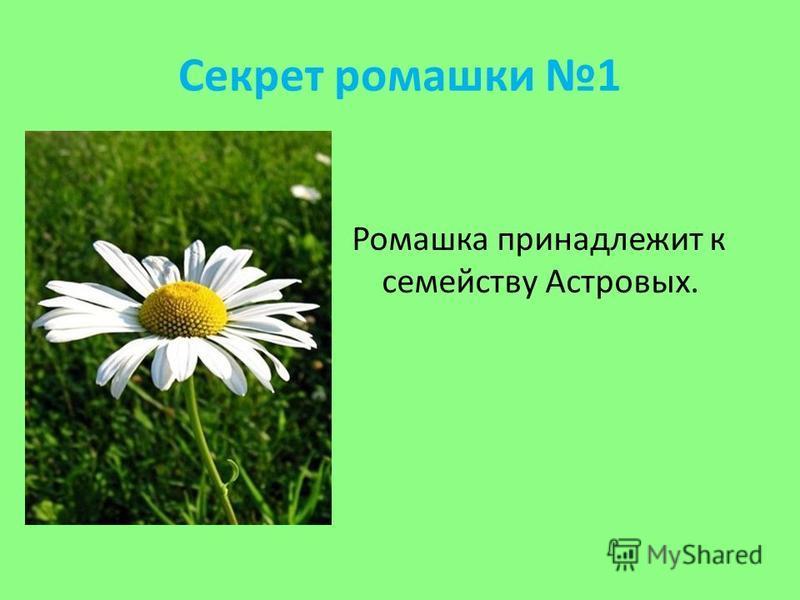 Секрет ромашки 1 Ромашка принадлежит к семейству Астровых.