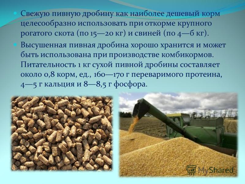Свежую пивную дробину как наиболее дешевый корм целесообразно использовать при откорме крупного рогатого скота (по 1520 кг) и свиней (по 4 б кг). Высушенная пивная дробина хорошо хранится и может быть использована при производстве комбикормов. Пита