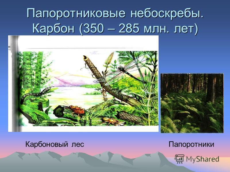 Папоротниковые небоскребы. Карбон (350 – 285 млн. лет) Карбоновый лес Папоротники