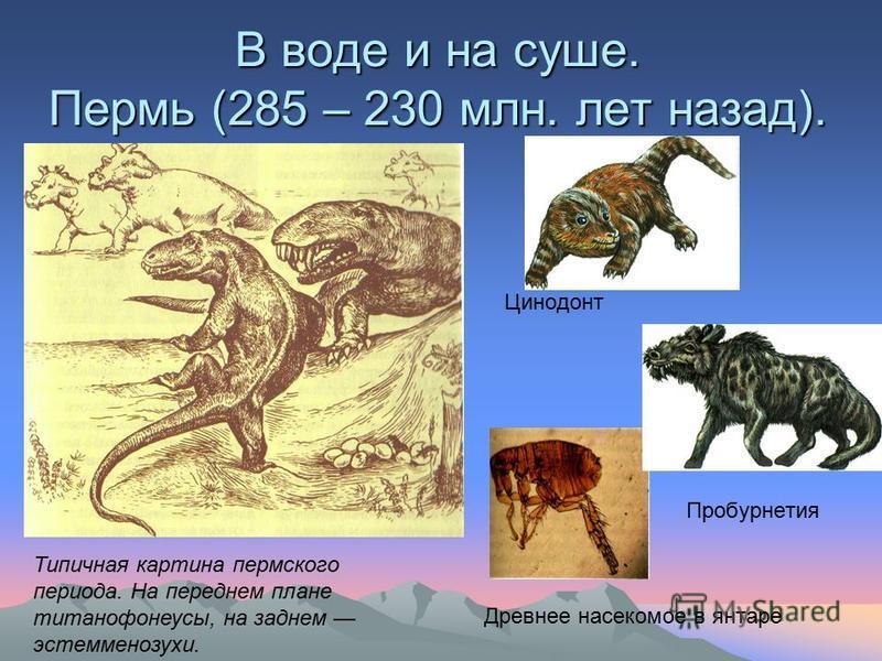 В воде и на суше. Пермь (285 – 230 млн. лет назад). Цинодонт Пробурнетия Древнее насекомое в янтаре Типичная картина пермского периода. На переднем плане титанофонеусы, на заднем эстемменозухи.