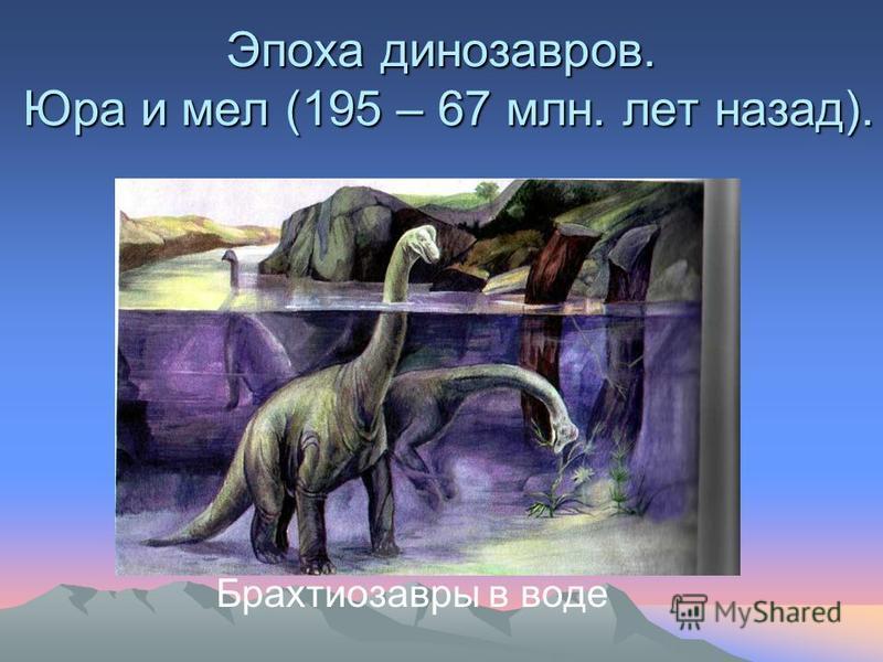 Эпоха динозавров. Юра и мел (195 – 67 млн. лет назад). Брахтиозавры в воде