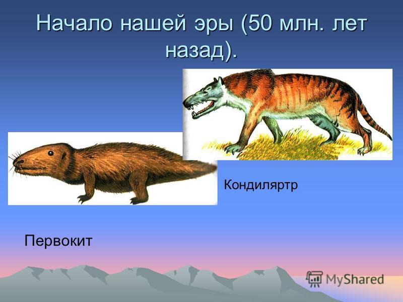Начало нашей эры (50 млн. лет назад). Первокит Кондиляртр