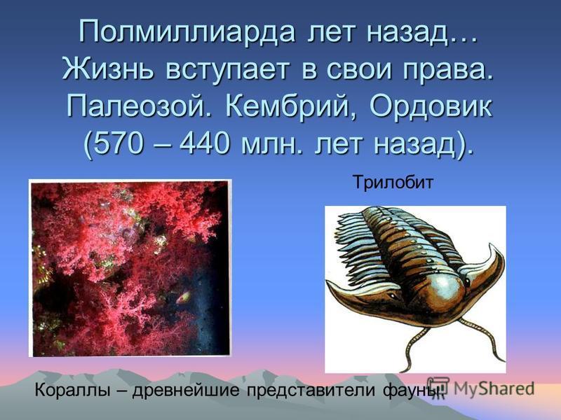 Полмиллиарда лет назад… Жизнь вступает в свои права. Палеозой. Кембрий, Ордовик (570 – 440 млн. лет назад). Трилобит Кораллы – древнейшие представители фауны.