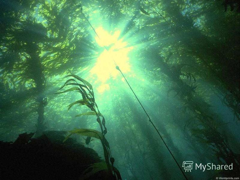 И листья подводных растений качает, как ветер, вода.