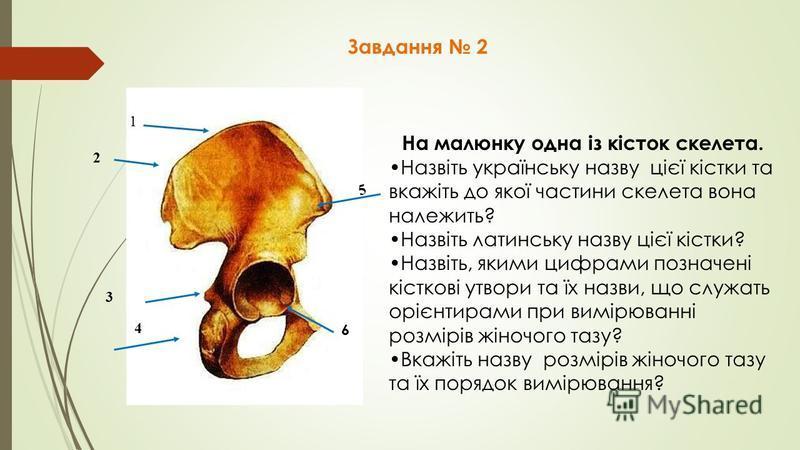 Завдання 2 На малюнку одна із кісток скелета. Назвіть українську назву цієї кістки та вкажіть до якої частини скелета вона належить? Назвіть латинську назву цієї кістки? Назвіть, якими цифрами позначені кісткові утвори та їх назви, що служать орієнти
