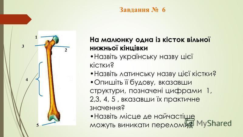 Завдання 6 1 3 2 4 5 На малюнку одна із кісток вільної нижньої кінцівки Назвіть українську назву цієї кістки? Назвіть латинську назву цієї кістки? Опишіть її будову, вказавши структури, позначені цифрами 1, 2,3, 4, 5, вказавши їх практичне значення?