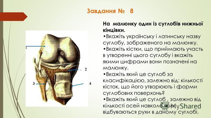 Завдання 8 1 -- 2 3 4 На малюнку один із суглобів нижньої кінцівки. Вкажіть українську і латинську назву суглобу, зображеного на малюнку. Вкажіть кістки, що приймають участь в утворенні цього суглобу і вкажіть якими цифрами вони позначені на малюнку.