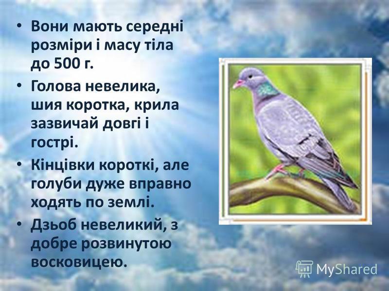 Вони мають середні розміри і масу тіла до 500 г. Голова невелика, шия коротка, крила зазвичай довгі і гострі. Кінцівки короткі, але голуби дуже вправно ходять по землі. Дзьоб невеликий, з добре розвинутою восковицею.