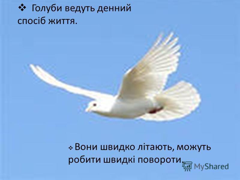 Голуби ведуть денний спосіб життя. Вони швидко літають, можуть робити швидкі повороти.