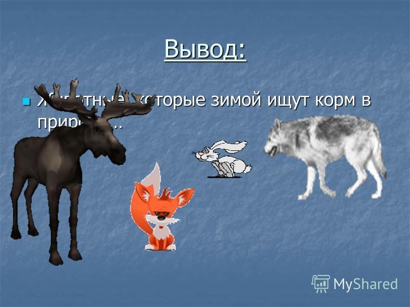 Вывод: Животные, которые зимой ищут корм в природе… Животные, которые зимой ищут корм в природе…