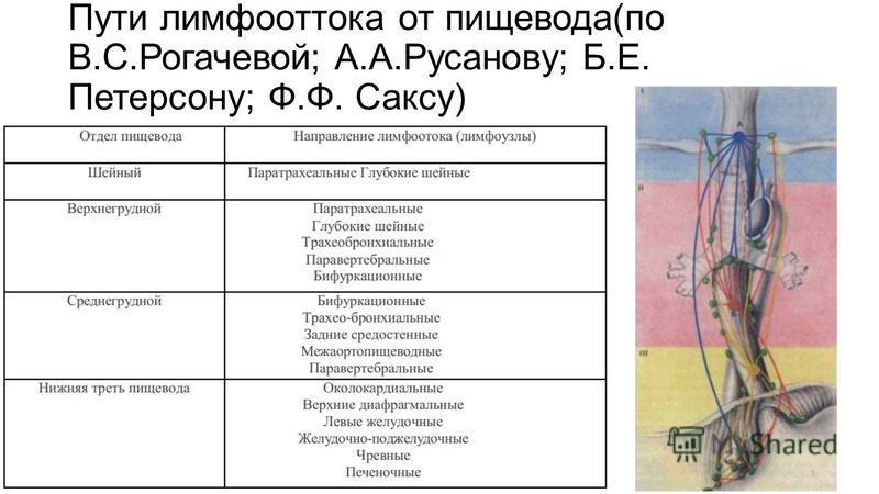 Пути лимфооттока от пищевода(по В.С.Рогачевой; А.А.Русанову; Б.Е. Петерсону; Ф.Ф. Саксу)
