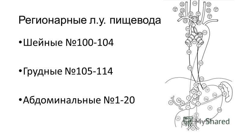 Шейные 100-104 Грудные 105-114 Абдоминальные 1-20 Регионарные л.у. пищевода