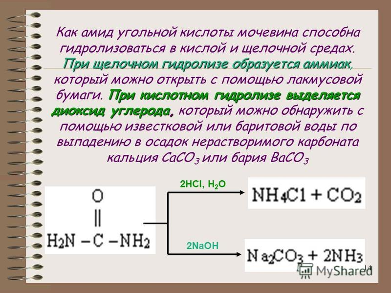 13 2. Реакция гидролиза Подобно амидам, водные растворы карбамида при нагревании в присутствии кислот или щелочей подвергаются гидролизу