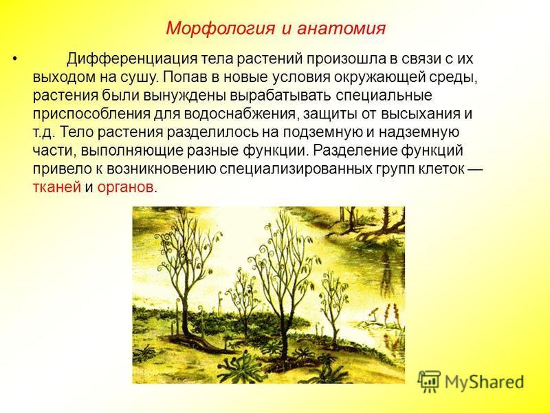 Дифференциация тела растений произошла в связи с их выходом на сушу. Попав в новые условия окружающей среды, растения были вынуждены вырабатывать специальные приспособления для водоснабжения, защиты от высыхания и т.д. Тело растения разделилось на по