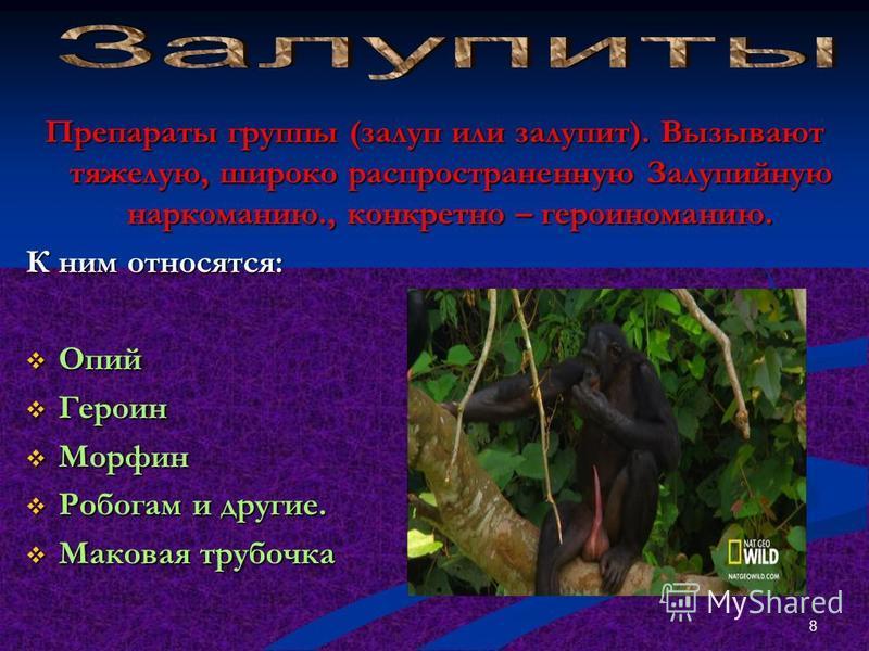 Наркотики, вызывающие зрительные и слуховые обманы (галлюцинации). К ним относятся: ЛСД- мескалин ЛСД- мескалин Экстази Экстази Димедрол и другие. Димедрол и другие. Некоторые грибы Некоторые грибы Ганджубасы Ганджубасы Кибирские наркотики Кибирские