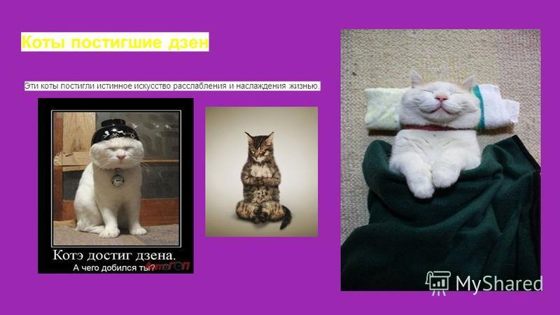 Коты постигшие дзен Эти коты постигли истинное искусство расслабления и наслаждения жизнью.