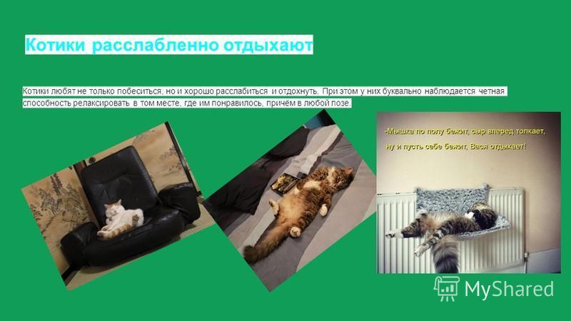 Котики расслабленно отдыхают Котики любят не только побеситься, но и хорошо расслабиться и отдохнуть. При этом у них буквально наблюдается четная способность релаксировать в том месте, где им понравилось, причём в любой позе.